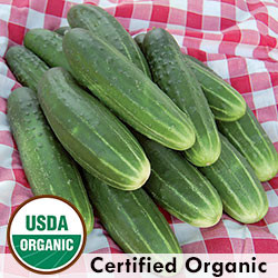 A & C Pickling Cucumber Organic Seeds - Seed Savers Exchange   Amish Country Store in Branson, Missouri