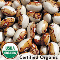 Hidatsa Shield Organic Bean Seeds - Seed Savers Exchange | Amish Country Store in Branson, Missouri