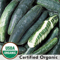 Japanese Climbing Cucumber Organic Seeds - Seed Savers Exchange | Amish Country Store in Branson, Missouri