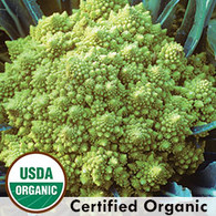 Romanesco Broccolli Organic