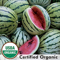 Chris Cross Watermelon Organic