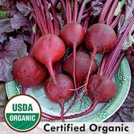 Bulls Blood Beet Organic