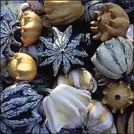 Ten Commandments Gourd