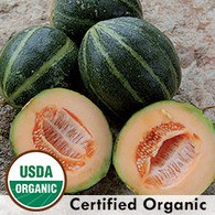 Emerald Gem Melon Organic