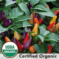 Aurora Pepper Organic