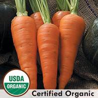 Danvers Half Long Carrot Organic