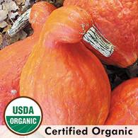 Boston Marrow Squash Organic