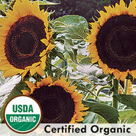 Taiyo Sunflower Organic