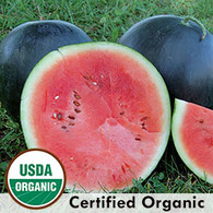 Blacktail Mountain Watermelon Organic