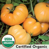 Dr.Wyches Yellow Tomato Organic