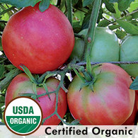 Peach Blow Sutton Tomato Organic Seeds - Seeds Savers Exchange | Amish Country Store in Branson, Missouri