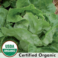 Ella Kropf Lettuce Organic Seeds - Seeds Savers Exchange | Amish Country Store in Branson, Missouri