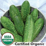 Russian Pickling Cucumber Organic Seeds - Seeds Savers Exchange | Amish Country Store in Branson, Missouri
