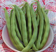 Kentucky Wonder Bush Bean Seeds - Seeds Savers Exchange | Amish Country Store in Branson, Missouri