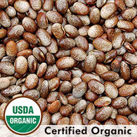 Turkey Craw Bean Organic Seeds - Seeds Savers Exchange | Amish Country Store in Branson, Missouri