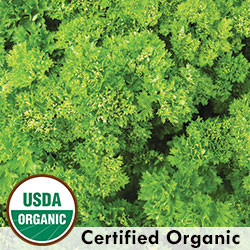 Triple Curled Parsley Organic Seeds - Seeds Savers Exchange | Amish Country Store in Branson, Missouri