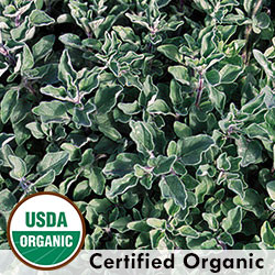 Greek Oregano Herb Organic Seeds - Seeds Savers Exchange | Amish Country Store in Branson, Missouri