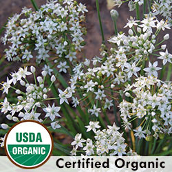 Chives, Garlic Herb Organic Seeds - Seed Savers Exchange | Amish Country Store in Branson, Missouri