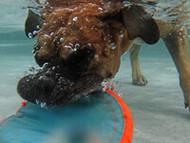 October 2014 Hottest Dog Photo Contest