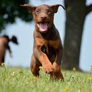 September 2015 Hottest Dog Photo Contest!