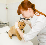 Should You Vaccinate Your Dog?