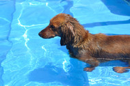 Physical Therapy: Helping Your Senior Dog Learn New Tricks