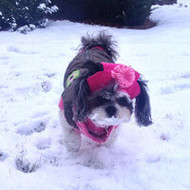 How to Keep Your Dog Safe In The Cold Weather