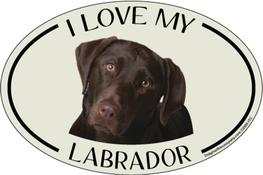 I Love My Chocolate Lab Colorful Oval Magnet