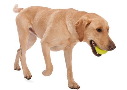 Zogoflex Jive - Dog Toy