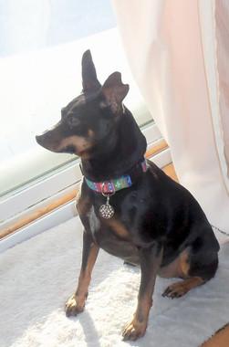 Crystal Snowflake Pet ID Tag - Lifetime Guarantee