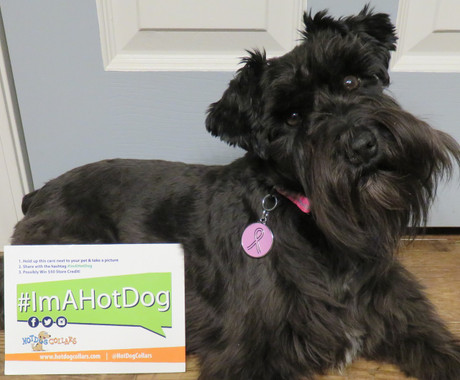 Pink Ribbon Pet ID Tag - Lifetime Guarantee