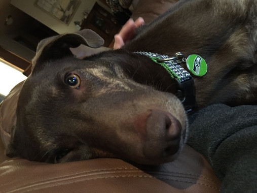 seahawks engraved dog id tag