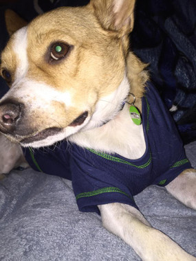 seahawks dog tag for dogs