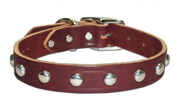 Latigo Leather Studded Dog COLLAR