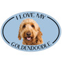 I Love My Goldendoodle Colorful Oval Magnet