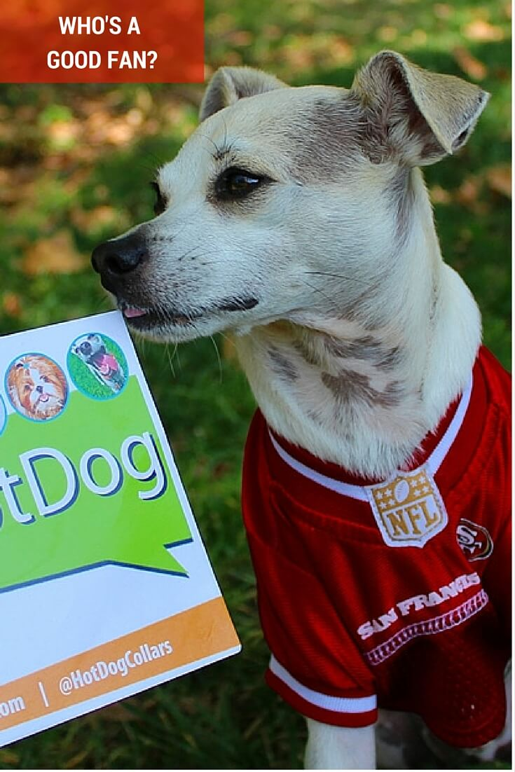 Official Spokesdog Happy wearing his 49ers pet jersey