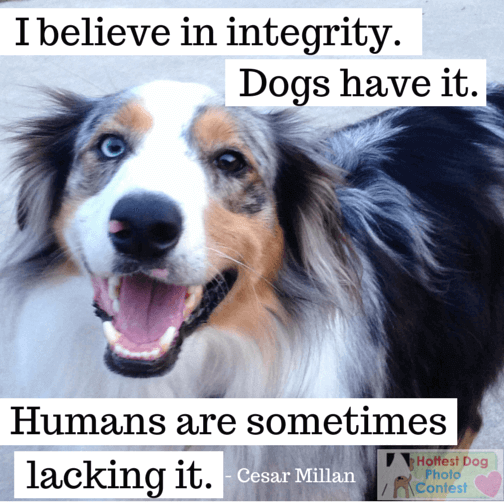 I believe in integrity, all dogs have it