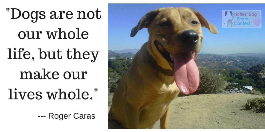 Dogs are not our whole lives but they make our lives whole