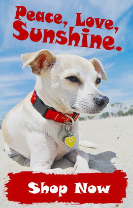 hero-beach-summer-dog-collars.jpg