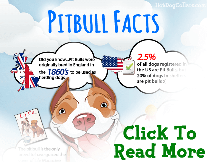 Learn more about pit bulls and why they are not as dangerous as you may think