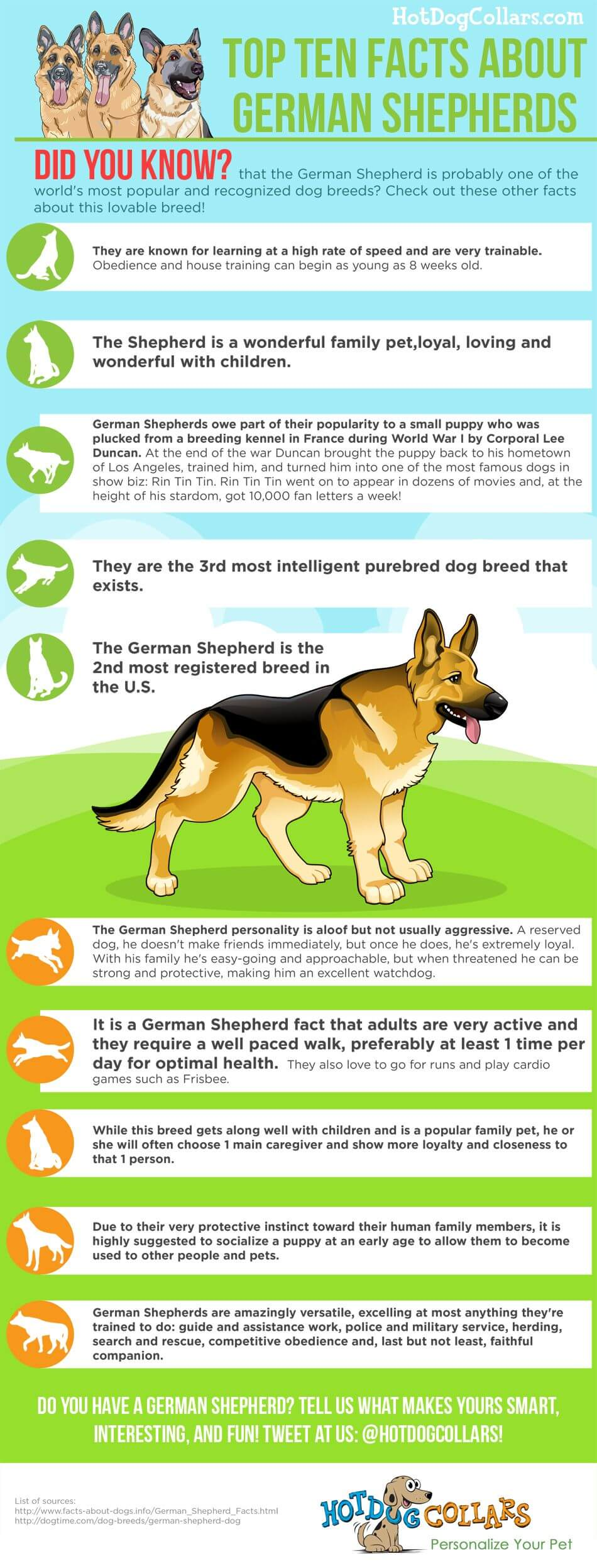 Did you know that the German Shepherd is probably one of the world's most popular and recognized dog breeds? Check out these other facts about this lovable breed!