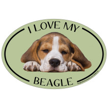 I Love My Beagle Colorful Oval Magnet