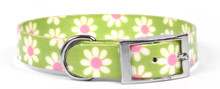Green Daisy Elements Dog Collar