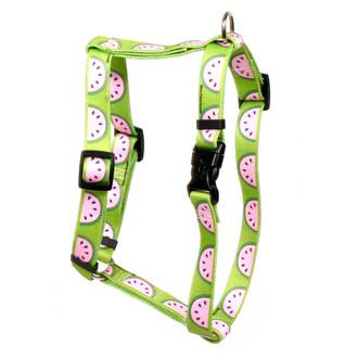Wonderful Watermelons Roman Style Dog Harness