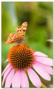 E071 Butterfly -xw