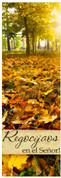 Fall Harvest Spanish church banner - rejoice in the Lord