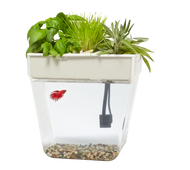 Water Garden 2.0 - fish tank that grows herbs & sprouts