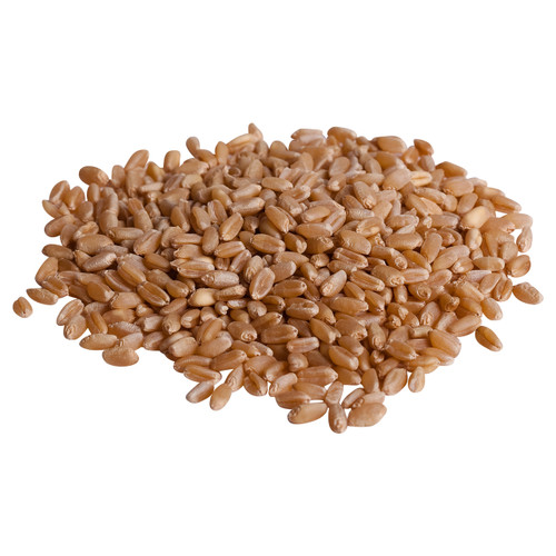 Organic Wheat (seeds for wheatgrass)