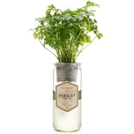 Eco Planter - Organic Parsley