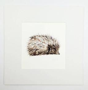 Hedgehog Print